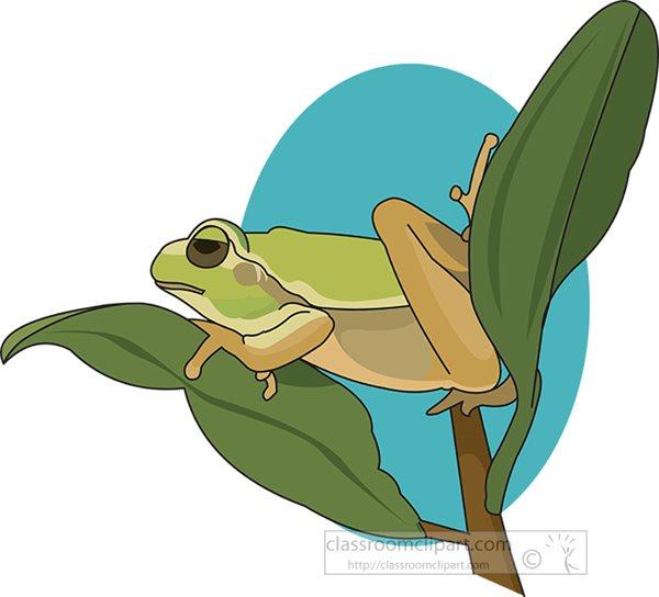 green-tree-frog-resting-on-plant-leaf-clipart.jpg