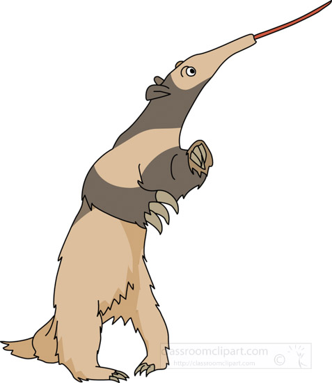 anteater-standing-on-two-hind-legs-clipart.jpg