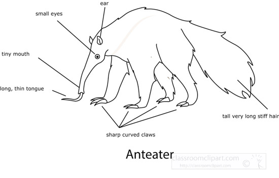 black-white-outline-printable-of-labeled-anteater-anatomy-clipart.jpg