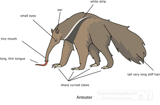 labeled-anatomy-of-an-anteater-clipart.jpg