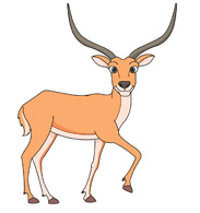 Antelope Clipart
