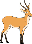 Free Antelope Clipart - Clip Art Pictures - Graphics - Illustrations