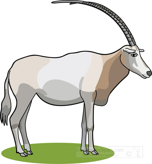 oryx-the-large-antelope-with-long-horns-clipart.jpg