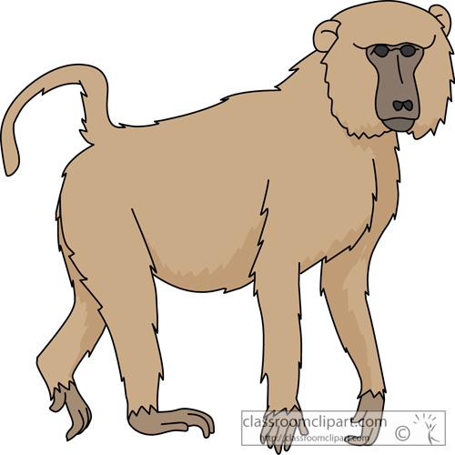 baboon_630.jpg