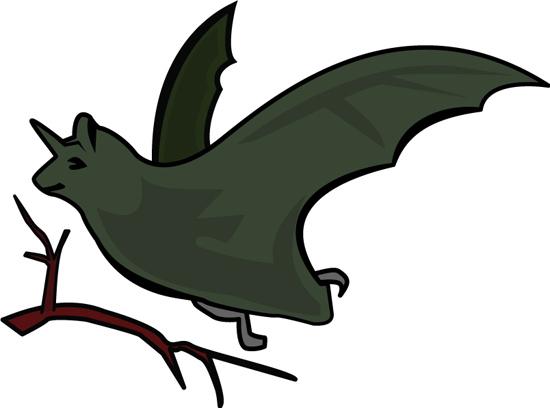 bat_126.jpg
