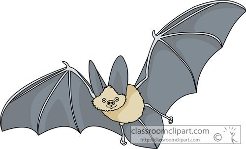 bat_630.jpg