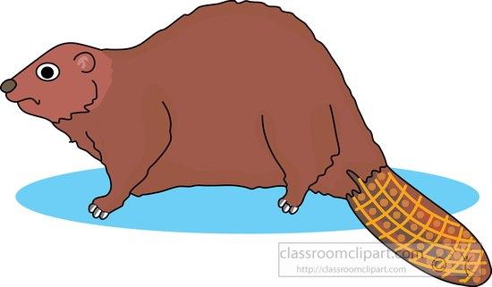 beaver_911_11A.jpg