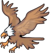 bald_eagle_24C.jpg