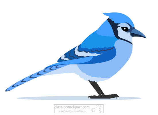 blue-jay-bird-clipart.jpg