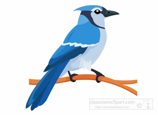 blue-jay-bird-on-branch-clipart-1014.jpg