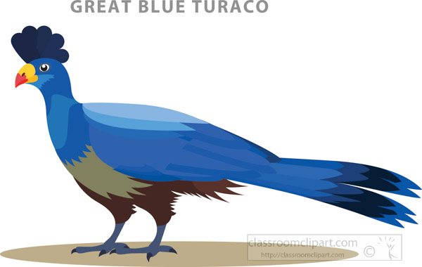 burundi-national-bird-great-blue-turaco.jpg