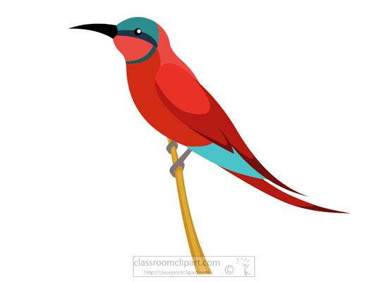 carmine-bee-eater-bird-clipart.jpg