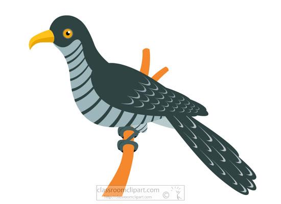 coocoo-bird-clipart-918.jpg