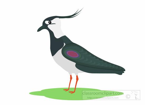 lapwing-bird-clipart-1014.jpg