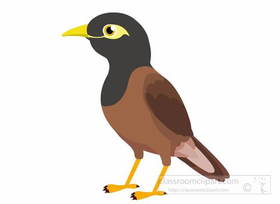 myna-bird-clipart-1014.jpg