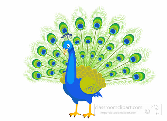 peacock-bird-with-feather-opened-clipart-1014.jpg