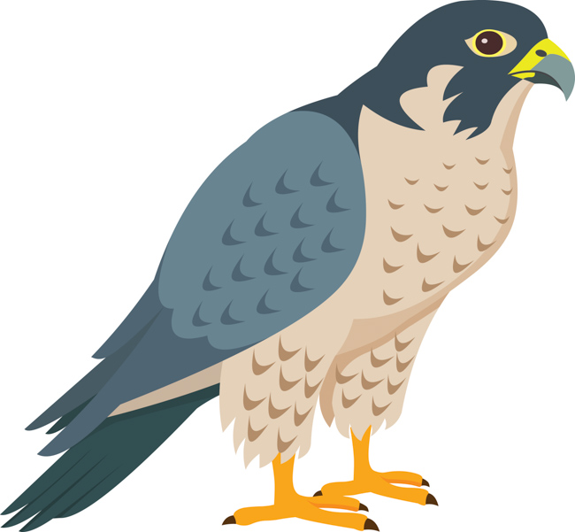 peregrine-falcon-bird-of-prey-clipart.jpg