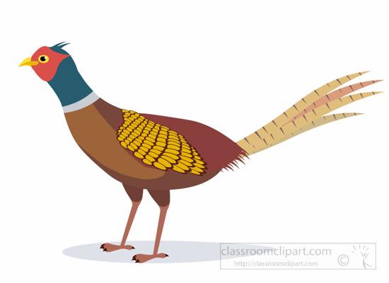 animal clipart bird clipart pheasant bird clipart 1012 rh classroomclipart com pheasants clipart pheasant clipart free
