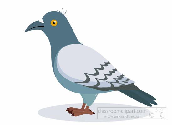 pigeon-bird-clipart-1012.jpg