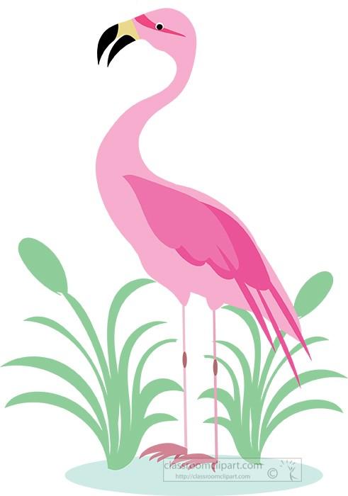 pink-flamingo-bird-standing-near-plants-clipart.jpg