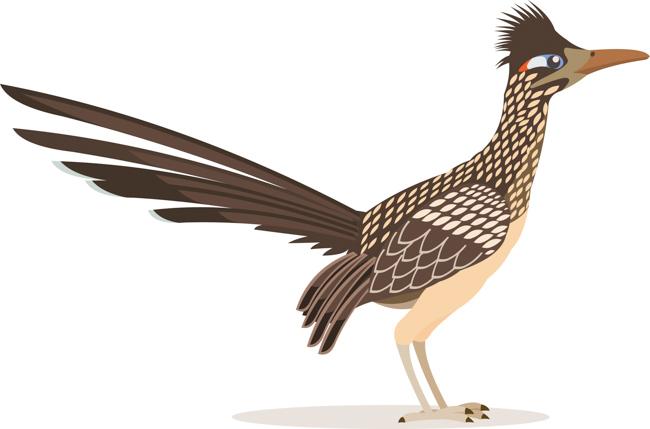 roadrunner-bird-animal-clipart.jpg
