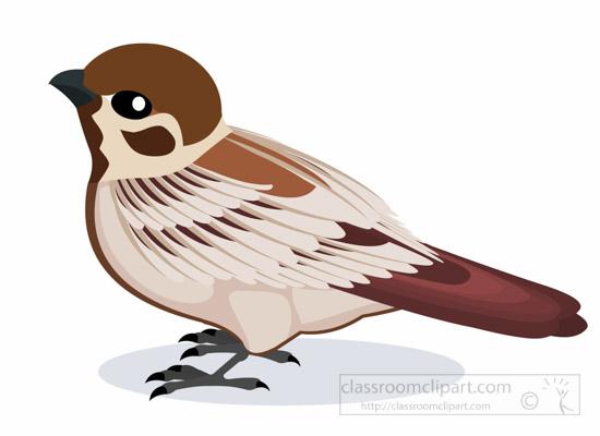 sparrow-bird-clipart-1012.jpg