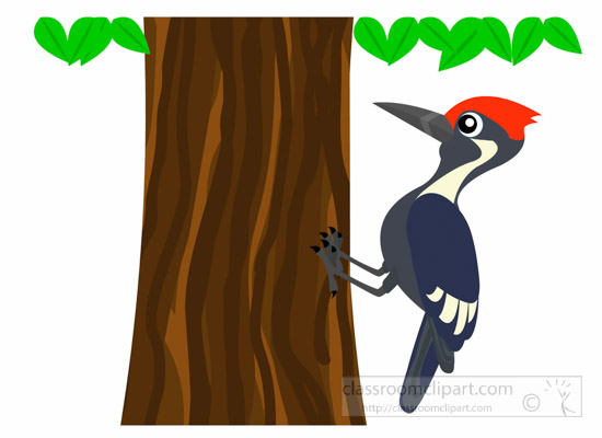 animal clipart bird clipart woodpecker bird on tree clipart 1012 rh classroomclipart com pileated woodpecker clipart woody woodpecker clipart