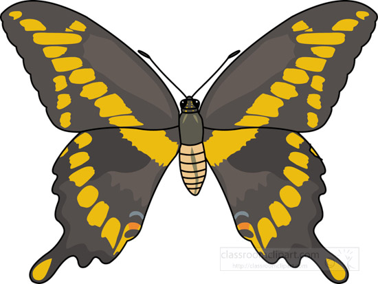 butterflies-_giant_swallowtail_butterfly_726.jpg