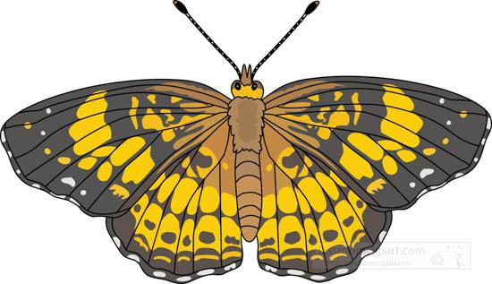 butterflies-_pearl_crescent_butterfly_726.jpg