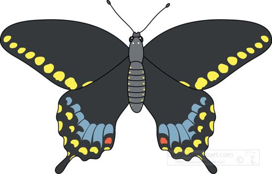 butterflies-_spicebush_swallowtail_butterfly_726.jpg