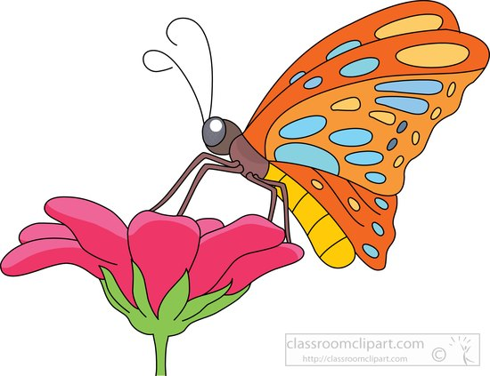 butterfly-getting-nectar-flower-clipart-7216-2.jpg