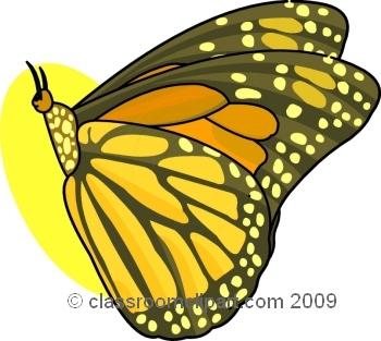 butterfly_609_7.jpg