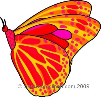 butterfly_609_9.jpg