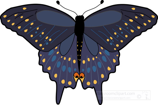 butterfly_black_swallowtail_630.jpg