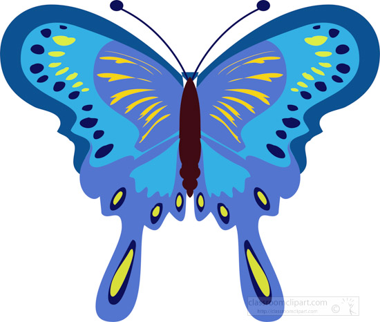 large-colorful-blue-yellow-butterfly.jpg