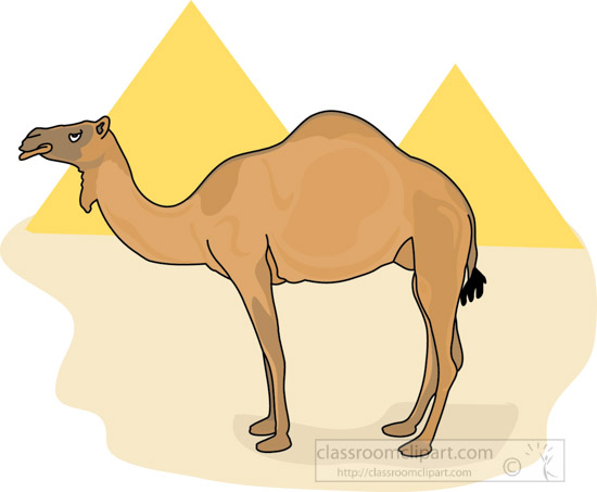 Camel_in_front_of_egypt_pyramids_212.jpg