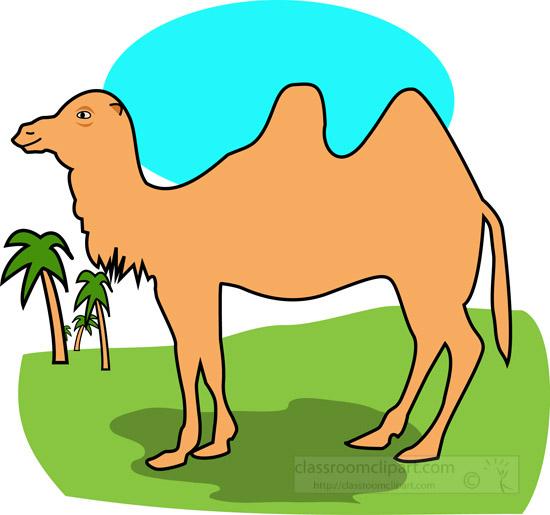 bacterian-camel-1111.jpg