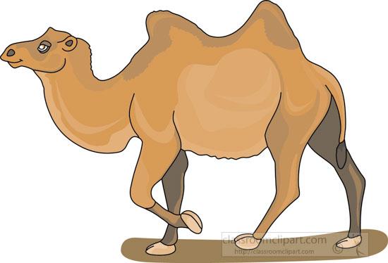 bacterian_camel_3_212.jpg