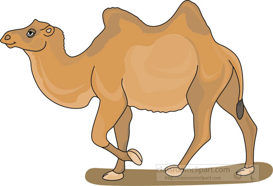 bacterian_camel_3_2129.jpg