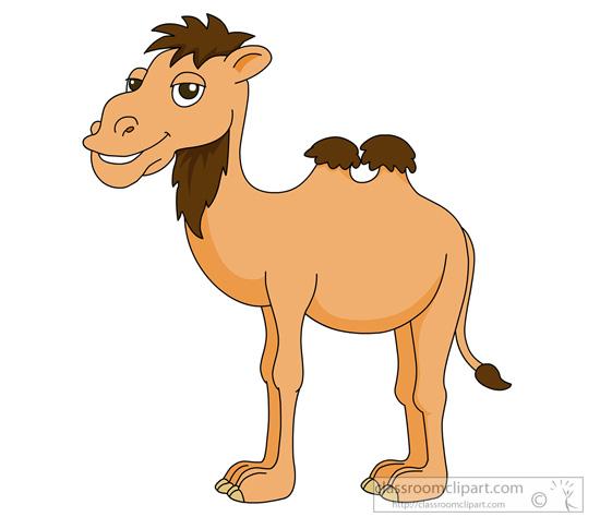 camel-910.jpg