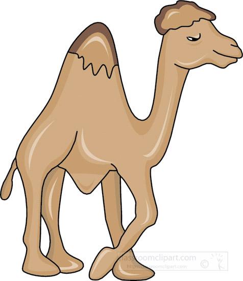 camel_2011-S_18a.jpg