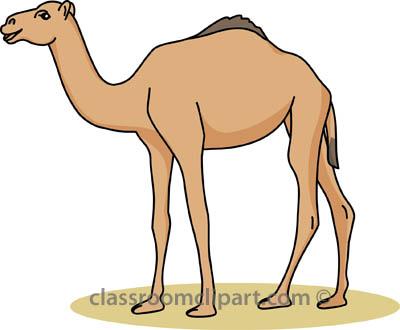 camel_31412_04 (1).jpg