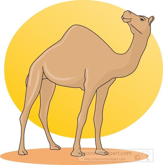 camel_31412_07.jpg