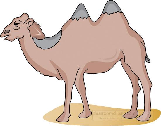 camel_4_11B.jpg