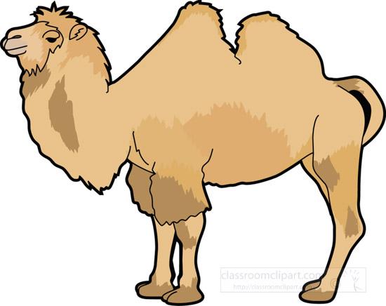 camel_630.jpg