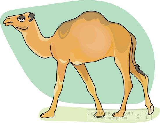 dromedary_camel_3_212.jpg