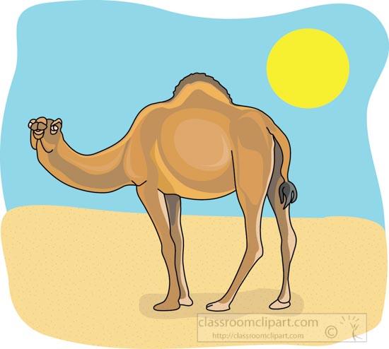 dromedary_camel_4_212b.jpg