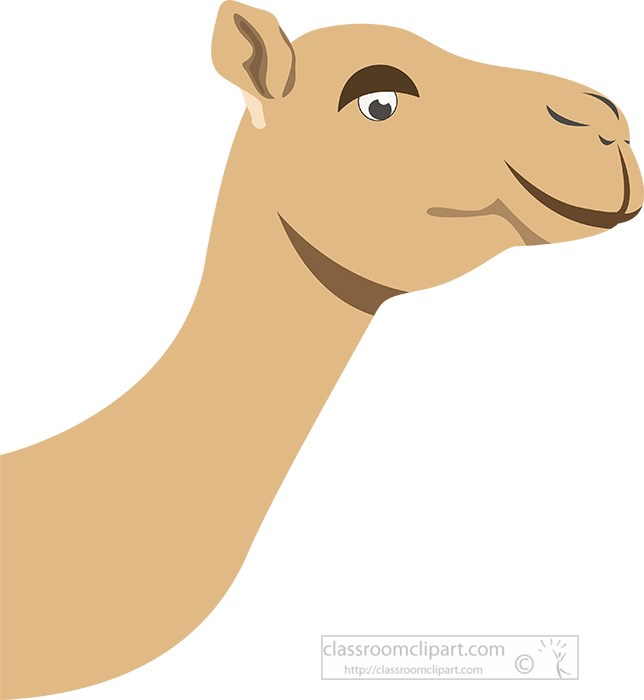 vector-illustration-of-camel-face-and-head.jpg