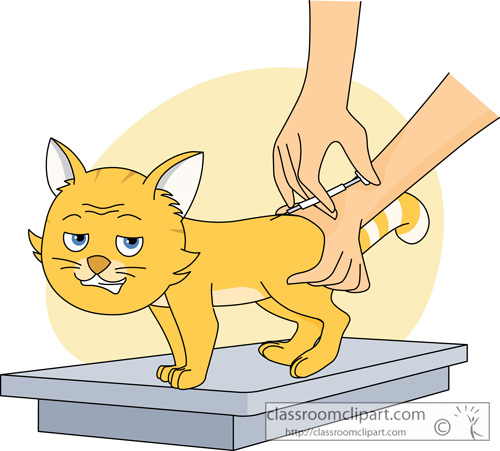 cat_getting_a_vaccination_813.jpg