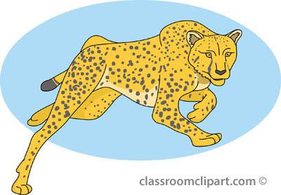 cheetah_01A_4112.jpg